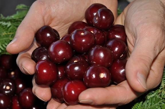 ....cherries.Hispalois.7.2.12.Spain.wc.cc