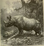 .......thickskin.India-Rhinoceros.BrehmsLifeOfAnimals.1895wc1.86m