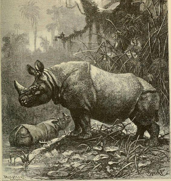 .......thickskin.India-Rhinoceros.BrehmsLifeOfAnimals.1895wc1.86m