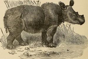 .....thickskin.Rhino.AdventureTravelExploration.1909.wc.953k
